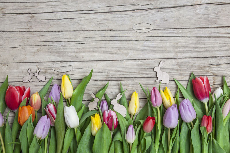 High Angle View Of Multi Colored Tulips On Table