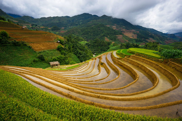 Terrace rice field at Mu Cang Vietnam Agriculture Farm Farmer Rice Vietnam Agriculture Beauty In Nature Destination Environment Farm Field Land Landscape Landscape_photography Landscapes Mountain Mountain Range Moutains Nature Outdoors Rural Scene Scenics - Nature Terraced Field Water