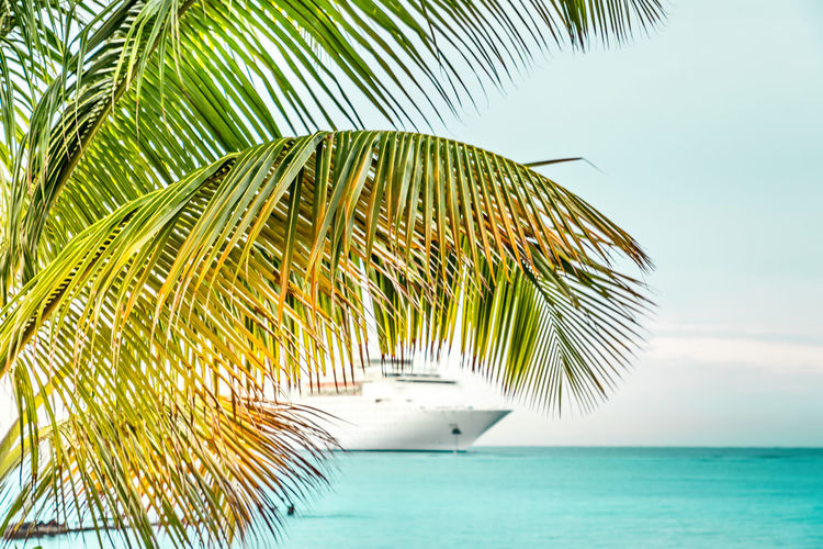 Palm tree and a cruise ship in the caribbean