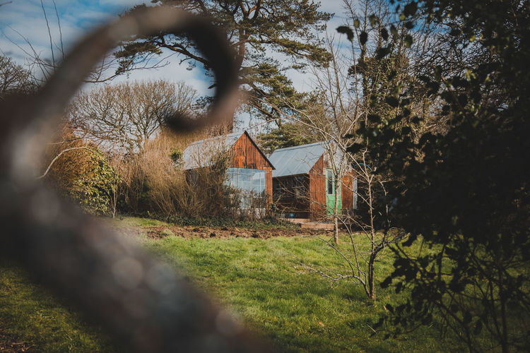 Tree Architecture Plant Built Structure Building Building Exterior House Land Field Focus On Background No People Nature Day Abandoned Growth Outdoors Selective Focus Grass Sky Agricultural Building Cabin Cottage