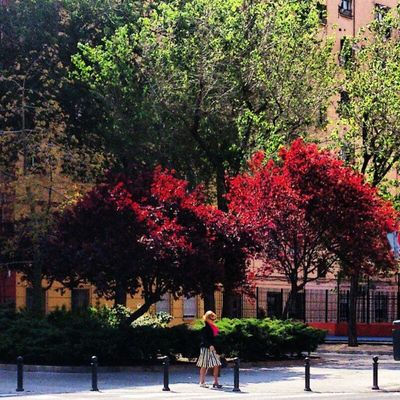 Arboles Arboles Trees Rojo Red Verde Green Pañuelo a juego