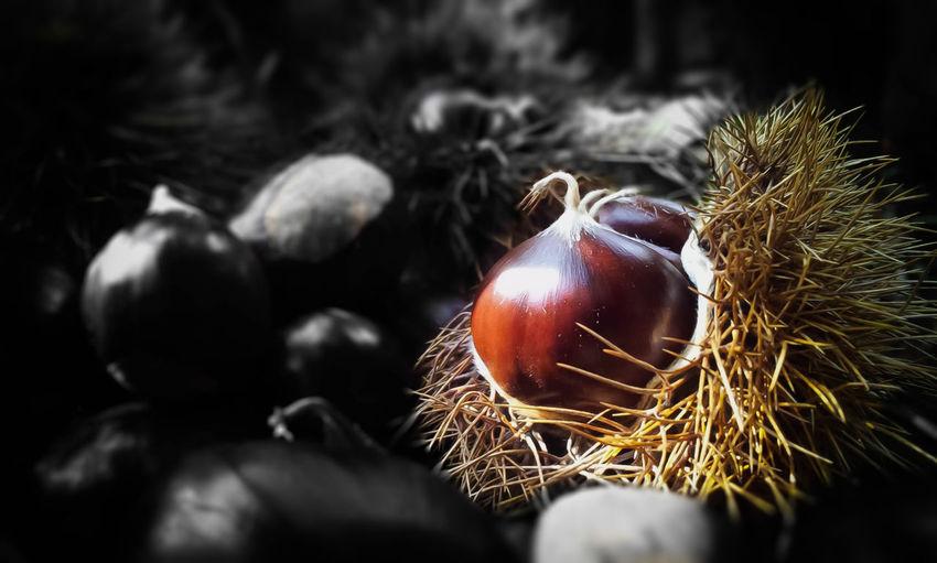 #EyeEmEsterlinda Autumn Beautiful Nature Chestnuts Close-up Food Mountain Nature Nature Tranquility
