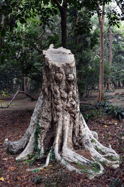 Trees Tree Stump Nature Natural Green
