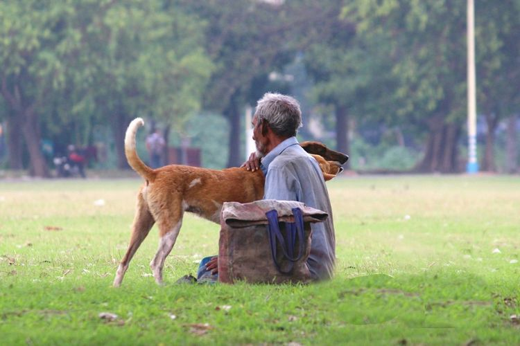Side View Of Man Embracing To Dogs On Grass