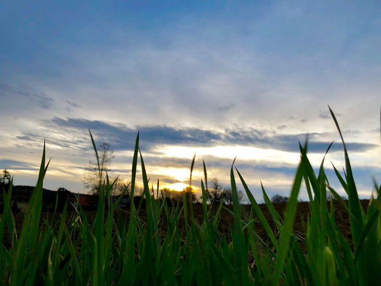 Sonnenaufgang 🌅 meine Lieblingsfarbe 🙌 Wienerwald  Nature Love Idyllic Sunrise Clouds Sky Plant Growth Beauty In Nature Nature No People Tranquility Tranquil Scene Scenics - Nature Grass Agriculture Field Landscape Rural Scene Outdoors