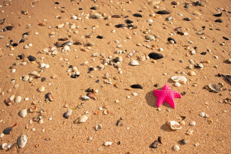My little star Wallpaper Travel Pinkstar Star Sand Beach Nature Day No People Outdoors Beauty In Nature Close-up Summer Exploratorium