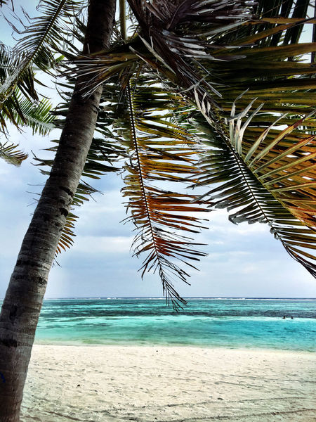 Maldives Atoll Beach Beachphotography Life Is A Beach Peace And Quiet Sea And Sky Palm Trees Blue Water Crystal Clear Waters Done That.