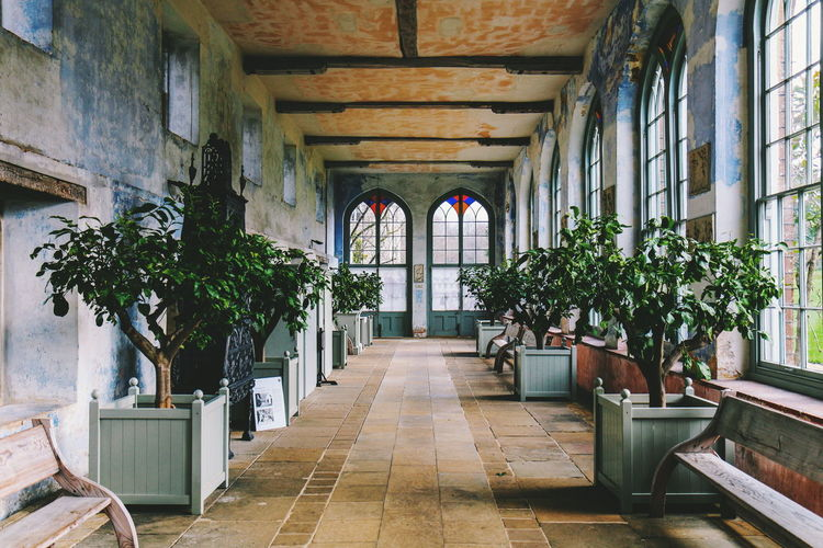 The orangery at Knole House, Kent. Greenhouse Orangery Architecture Indoors  Built Structure Day No People