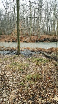 Tree Nature Day Outdoors Beauty In Nature Scenics Water Bare Tree Outside Winter Photography Nature Beautiful Trees Outdoor Photography Pond Winter Wonderland Valley Walking Path Beauty In Nature Tree Solitude CLE  2017 Jrosemarieb