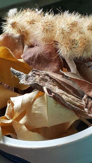 Braun Braunton Braunes Blatt Pflanzenwelt Pflanzen Kaktus