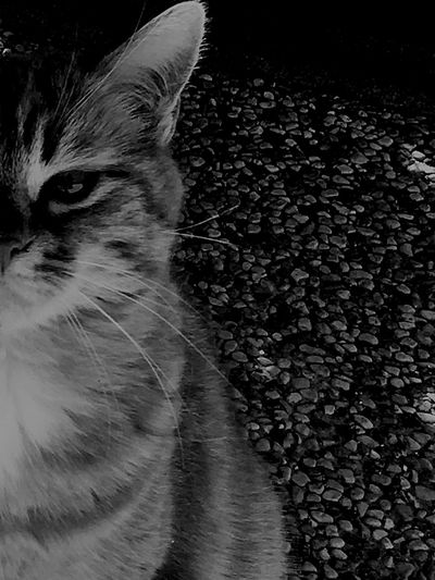 Cat Domestic Cat Domestic Animals Animal Themes One Animal Mammal Pets Feline No People Close-up Indoors  Day Welcome To Black