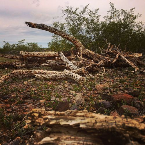 The Week On EyeEm No People Nature Cacti Graveyard Dead Tree Outdoors Beauty In Nature Close-up Tranquil Scene