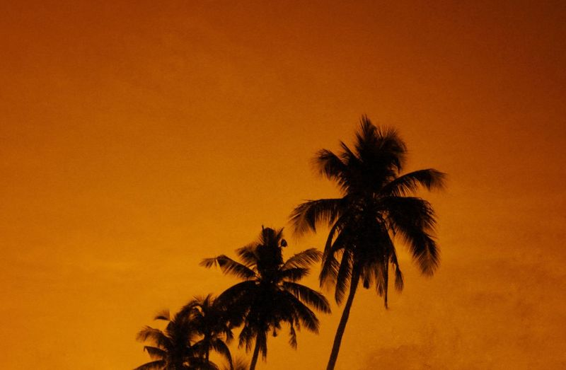 Silhouette palm trees against orange sky