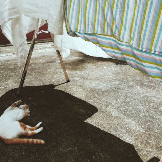 Sunlight Shadow Leisure Activity Resting Lying Down Outdoors Cat Animal Themes Sunshine Vscocam