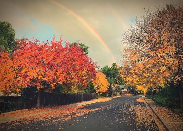 """""""Pot Of Gold"""" A rainbow in suburbia leads to an Autumn pot of gold. Autumn Collection Fall Beauty California Autumn colors Fall Fall Colors Suburban Exploration Tree Sky Beauty In Nature Nature Rainbow No People Road Multi Colored Scenics - Nature"""