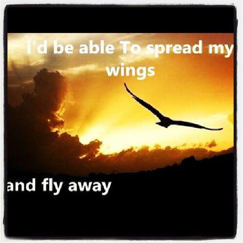 Prigionierodiunsogno , Volarevia , Pauradivolare , Instafrasi , memes, riflessioni, cit, tornareasognare, vivere, live, love, wings, flyaway, instaquote