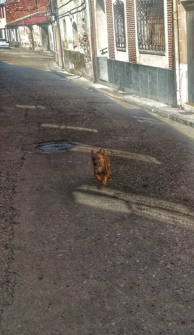 """""""Linda"""" running One Animal Animal Themes Domestic Animals Pets Building Exterior Mammal Architecture Built Structure Street Dog Road Domestic Cat City Day Outdoors Feline Stray Animal Footpath The Way Forward No People"""