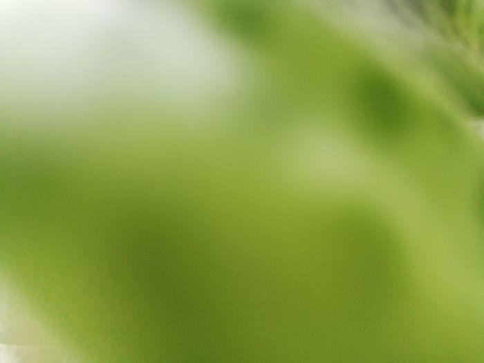 Defocused image of green plant