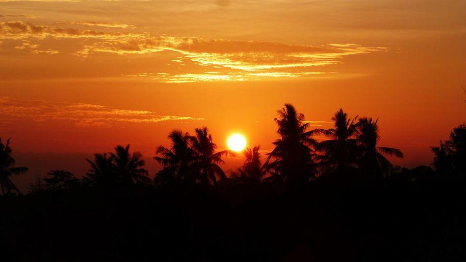 Tree Sunset Silhouette Dramatic Sky Orange Color Beauty In Nature Landscape No People NTB Rumahalir DELTA API Lombok Island