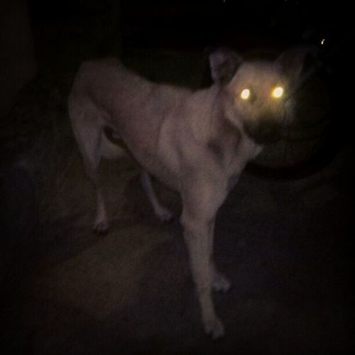 Cuidado cão feroz ... Vei na boa, agora dou o Cyclop ... rs Vinaboa Entaovai Instalove Lovepet dogs dog pet cuidado cuide goodboy