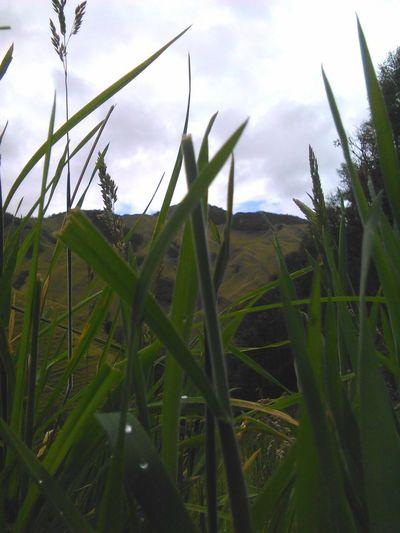 Algun lugar donde siempre los detalles van a marcar la diferencia, una ilusion que pocos logran admirar 🙌🌴🌄🗻 Rural Scene Growth Agriculture Farm Sky Nature Environmental Conservation Field No People Plant Green Color Landscape Cloud - Sky Outdoors Day Renewable Energy Grass Beauty In Nature