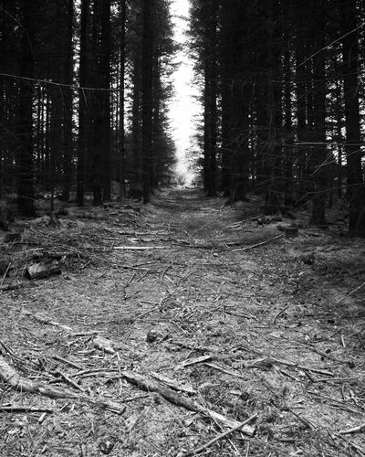 forrest walks Tree Nature Forest Day Outdoors No People Beauty In Nature Backgrounds Blackandwhiteworld Blackandwhitephoto Photography Beauty In Nature Rural Scene EyeEm Selects The Week On EyeEm Abstract Photography
