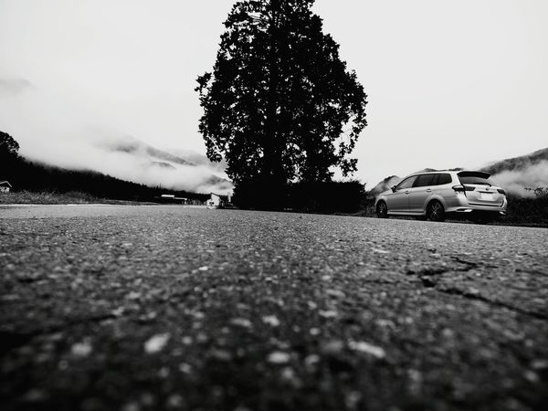 Car Cloud - Sky Weather No People Tree Day Sky Low Angle View Low Angle Black And White Collection  Black And White Collection  Blackandwhitephoto Blackandwhite Blackandwhitephotos Monochrome World Blackandwhiteonly Blackandwhite Photography Blackandwhitepics Beauty In Nature