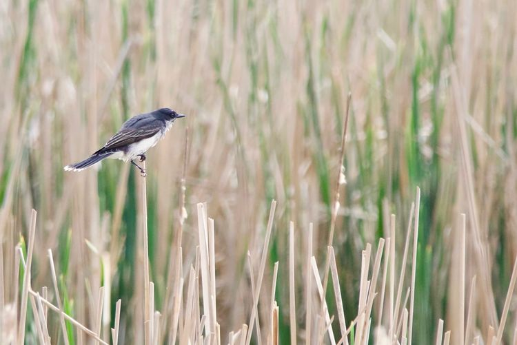 Close-up of bird perching on plant in field