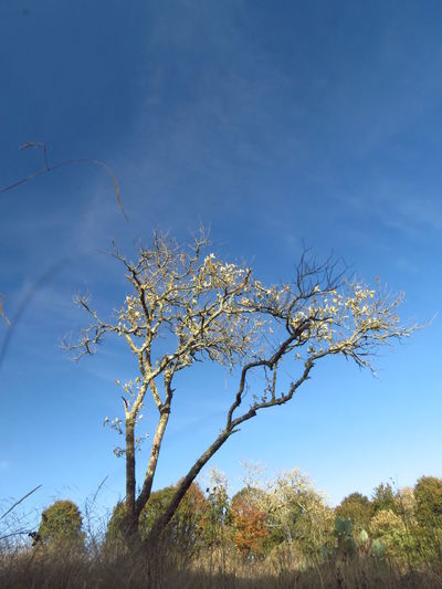 Día de Campo Beauty In Nature Blue Branch Day Growth Nature No People Outdoors Sky Tree