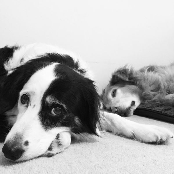 Animal Themes Blackandwhite Dog Dogs Domestic Animals Looking At Camera Lying Down Mammal Pets Relaxation Sleepy Tired Two Animals Black And White Blackandwhite Photography Black&white Black And White Photography Blackandwhitephotography Black And White Collection  Cute Eyes Things I Like