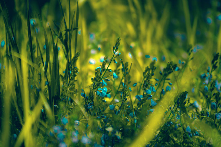 Flowers in grass Fragility Nature Grass Landscape Summertime In Bloom Wildflower Flower Head Blooming Petal Blossom Uncultivated Plant Life