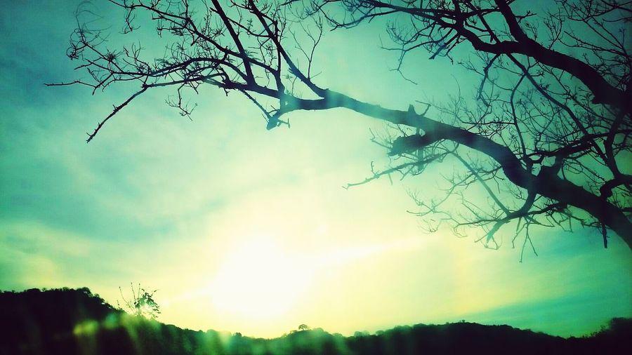 La falcedad es tan antigua como el árbol del Eden. Check This Out Tree Taking Photos Ramas First Eyeem Photo
