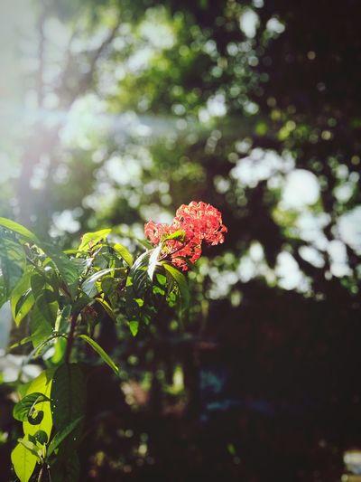 #Flower #home