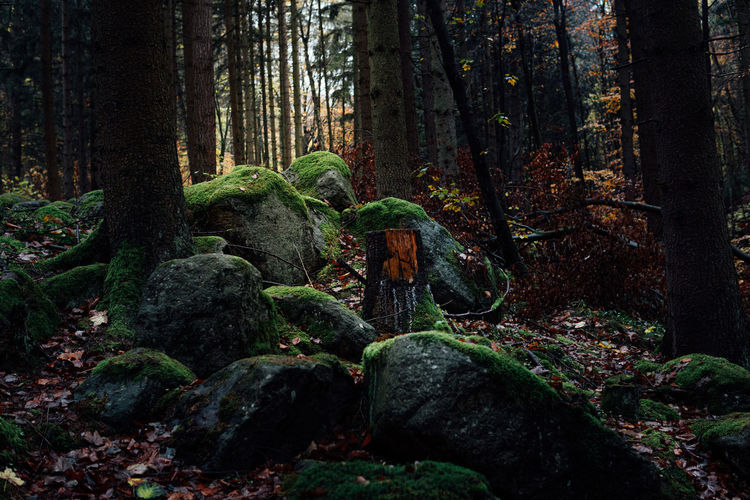 Wald Imharz19