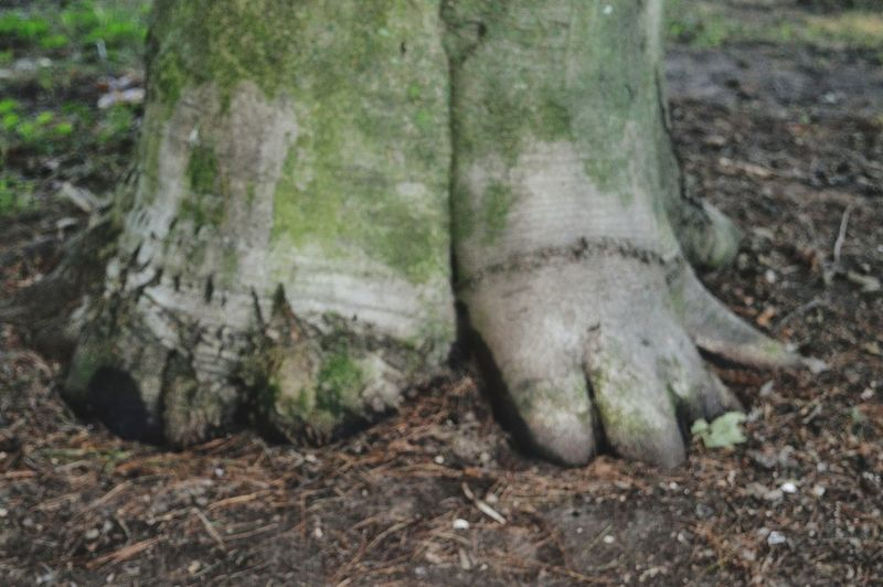 Aliens are here! Tree Tree Trunk Close-up Woods Moss WoodLand Root Bark Forest Soil Growing