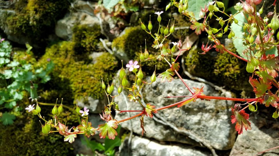 Chemin des écoliers de Sainte Radegonde Flower Plant Botany Stone Wall Wild Countryside Nature Nature_collection Nature Photography Tree Close-up Plant Flower Head Petal Moss Branch Growing