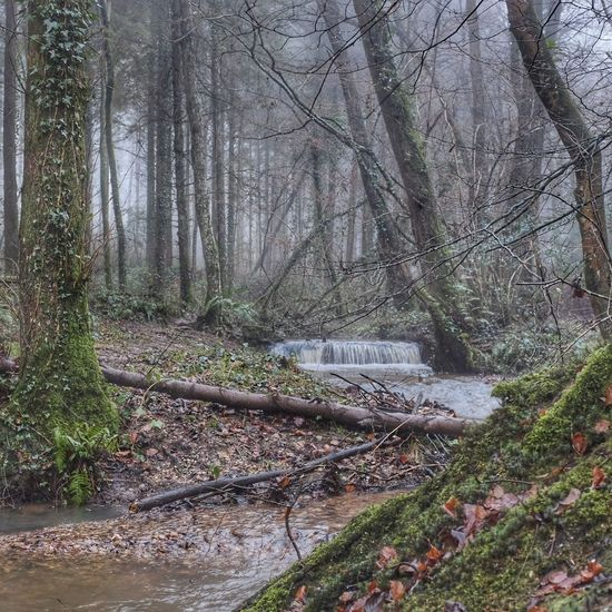 Tree Nature Forest Water Growth Tranquility Beauty In Nature Day Scenics Outdoors Tranquil Scene No People Branch X100t Rural Scene Devon Foggy Landscape Winter Fog