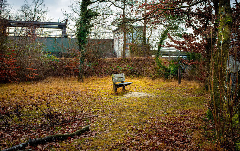 Abandoned bench on field by trees during autumn