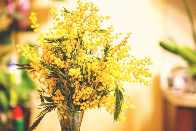 Mimosa Yellow Flowers Spring March Bouquet little suns