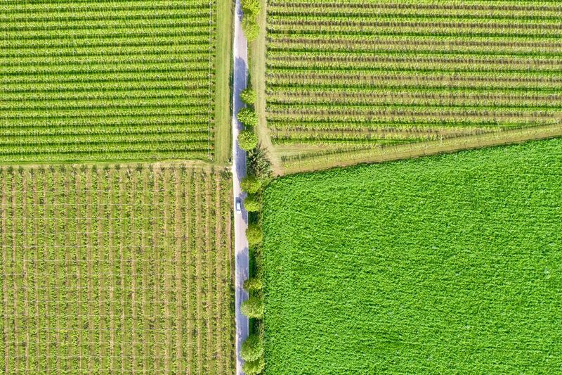 Italy, Verona: Valpolicella wineyards Drone  Green Color Agriculture Plant Land Nature No People Growth Field Wineyard Valpolicella Drone Photography From Above  High Angle View Looking Down Pattern Textured  Full Frame Crop  Backgrounds Parallel Lines Lines Landscape Springtime Day Daylight Daytime Geometry Horizontal Italy Verona Repetition Nature Outdoors Nobody Viniculture Environment Shades Of Green  In A Row Side By Side Order Abundance Rural Scene Aerial View Column Road Country Road Curve Transportation Tranquil Scene Beauty In Nature Scenics - Nature