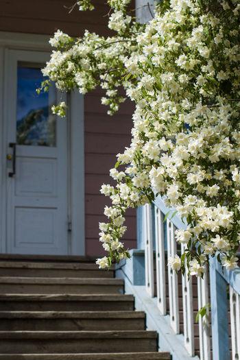 White flowering plant against building