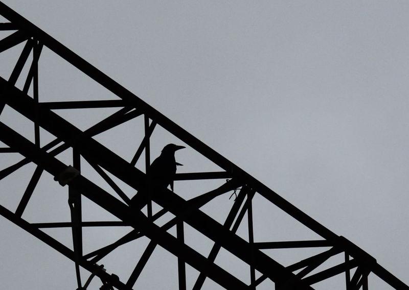 железная_дорога жд Electricity Pylon Electricity  City Bird Bird Photography Black Bird черная птица птица Железо конструкция силуэт чёрное на сером