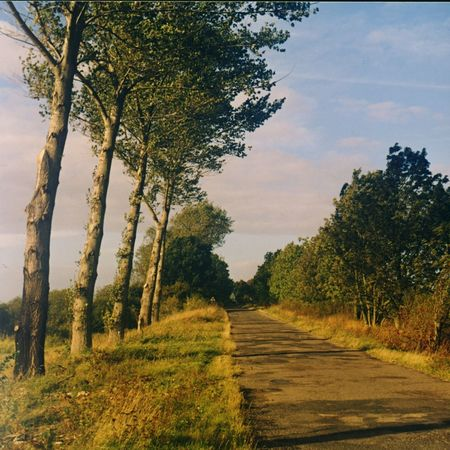 Tree Lined Street Baltic Sea Poland Trees Road Tree Lined Road Avenue Of Trees Avenue Tree Nature Landscape Scenics No People Tranquil Scene Tranquility Sky Day Rural Scene Field Outdoors