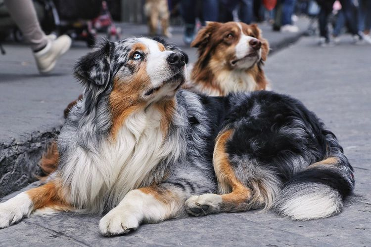 Close-Up Of Dogs Sitting Outdoors