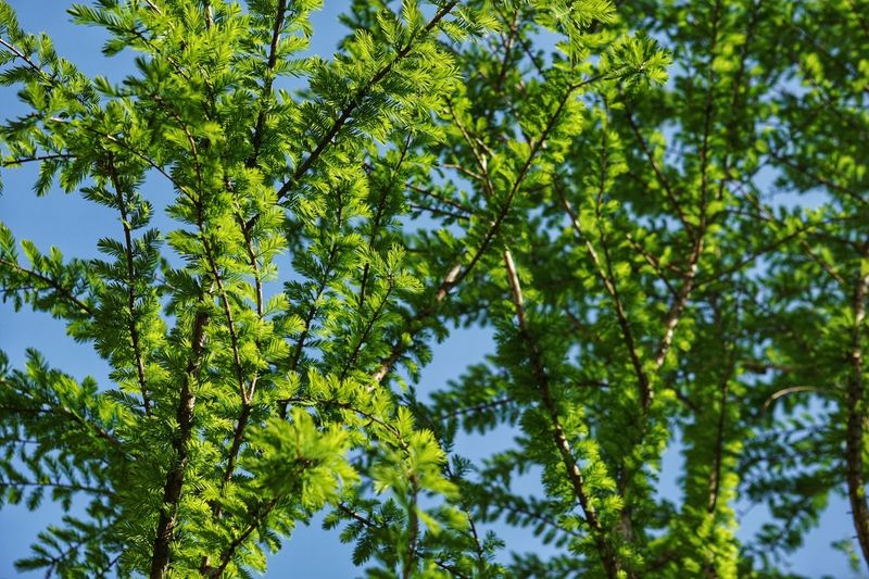 Nature Tree Forest Green Color Low Angle View Day Beauty In Nature Growth Leaf No People Outdoors Branch Freshness Sky
