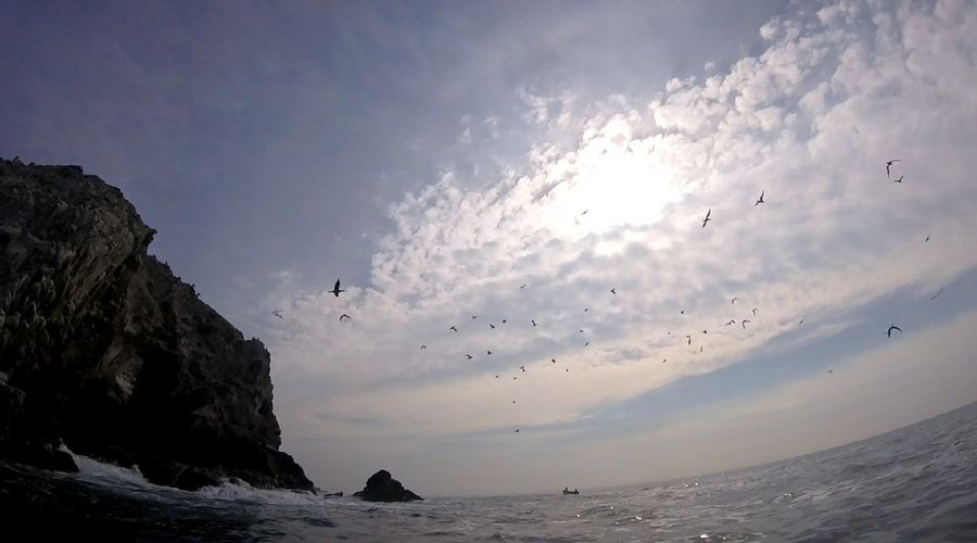 Flying Bird Beach Nature Sea No People Animal Themes Sky Sand Sunset Water Mazunte Mexico De Mis Amores
