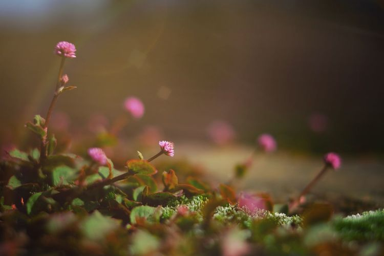 Fuji Xt20 Flower Plant Flowering Plant Freshness Beauty In Nature Vulnerability  Fragility Nature Flower Head Outdoors No People Close-up