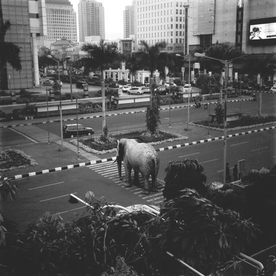 Elephant crossing... Black And White Iphonephotography Bw IPhoneography EyeEm Blackdrawing Blackandwhite Monochrome Getty Images Gettyimages Art