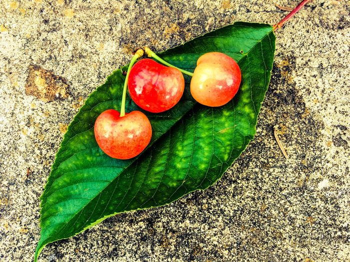 cherry leaf The Still Life Photographer - 2018 EyeEm Awards Tasty Sweet Cherry Cherries Cherry Leaf Leaf Food Healthy Eating Fruit Food And Drink Freshness Vegetable Wellbeing High Angle View Still Life Green Color Red Day No People Nature Outdoors Organic Close-up The Still Life Photographer - 2018 EyeEm Awards