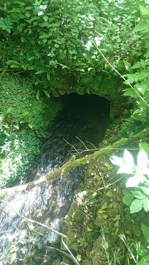 Nature Ferns Water Sluice